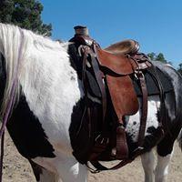 DK WADE Saddle