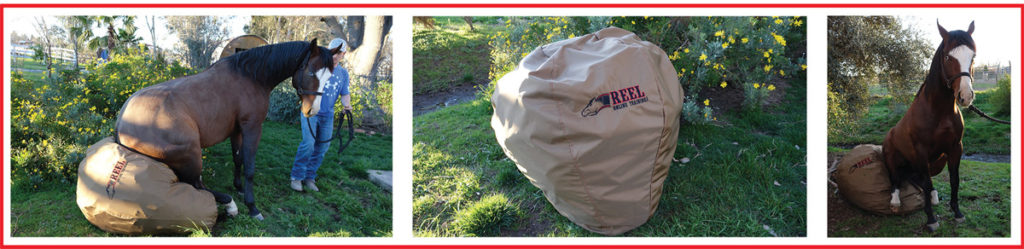 Equine Training Bag